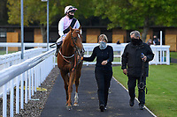 Winner of The Weatherbys TBA Conditions Stakes Apollo One  (pink) ridden by Martin Harley and trained by Peter Charalambous is led into the Winners enclosure during Horse Racing at Salisbury Racecourse on 1st October 2020