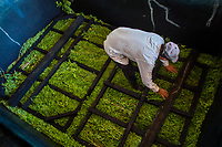 A Salvadoran farm worker loads the leaves and branches of the indigo plants into a concrete tank to macerate at the semi-industrial manufacture near San Miguel, El Salvador, 12 November 2016. For centuries, indigo, a natural deep blue dye extracted from the leaves of tropical plants (Indigofera), has been known to the native indigenous inhabitants of Central America who used the blue tincture to color their fabrics and pottery. Although demand for natural indigo dropped significantly at the end of 19th century when a synthetic indigo was firstly introduced, commercialization of natural indigo has risen again during the last decades. Small-scale indigo farms, processing the crop on sustainable and ecological basis, are growing throughout the country, returning El Salvador to the place of the main natural indigo producer in Latin America.