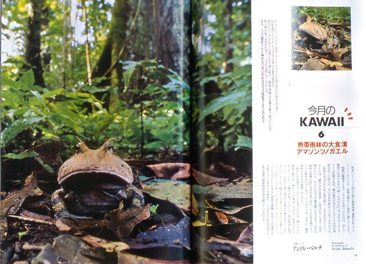 Magazine article, SINRA Japan