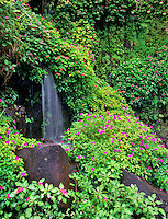 Impatiens with small waterfall. Near Hana, Maui, Hawaii.