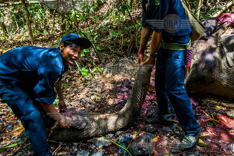 Two mahouts drag the decapitated trunk of a 14-year-old male wild elephant that had been killed for its skin and tusks by poachers the day before. In this case, the poachers took only the tusks of the elephant and managed to escape just before the security forces arrived, leaving the skin behind. Poachers often decapitate male elephants with tusks in order to obtain the whole of the tusk including its innermost part. For elephants without tusks, they kill the animal then skin it.