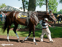 Speighter Man before The Joe French Memorial Stakes at Delaware Park on 6/1/13