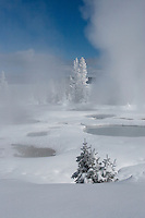 West Thumb Geyser basin at twenty below zero can be spectacular. The air is crisp and clear while the thermally produced steam rolls in and out.