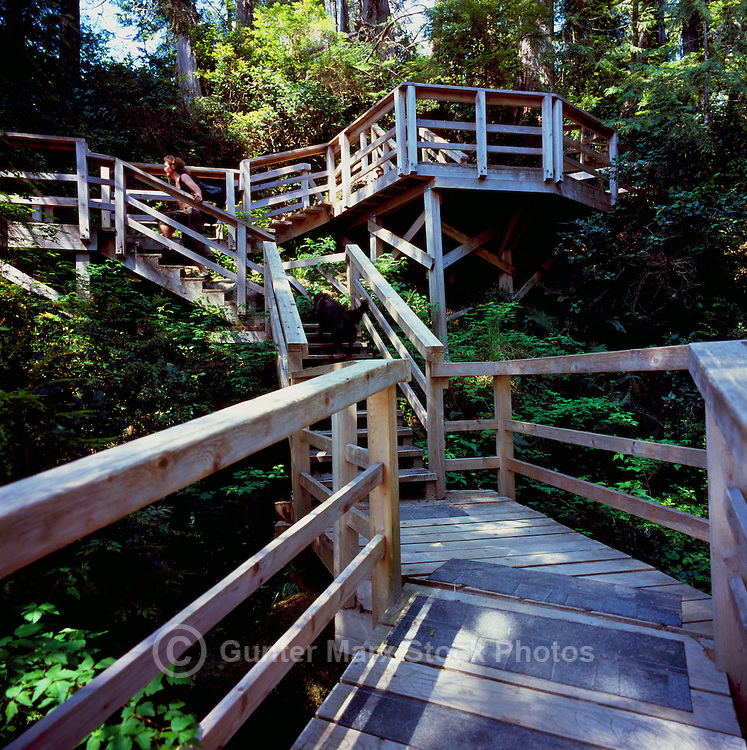 Hiker hiking on Boardwalk Trail along Pacific West Coast of Vancouver Island, BC, British Columbia, Canada