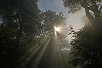 Sonnenstrahlen scheinen durch Blätterdach, Sonne, Wald, Laubwald