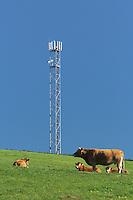 Les bovins sont-ils sensible aux emissions des antenne de telephonie ?.
