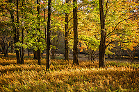Tucker County woods lights up when the morning sun arrives.<br /> <br /> -Limited Edition of 50 Prints