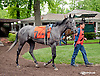 Little Miss Fitz before The Our Mims Stakes at Delaware Park on 5/18/13