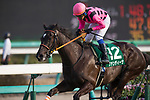 FUNABASHI,JAPAN-MARCH 20: Fan Dii Na #12,ridden by Yasunari Iwata,wins the Flower Cup at Nakayama Racecourse on March 20,2017 in Funabashi,Chiba,Japan (Photo by Kaz Ishida/Eclipse Sportswire/Getty Images)
