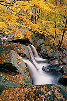 Trap Falls and<br />   American beech<br /> Willard Brook State Forest<br /> Massachusetts