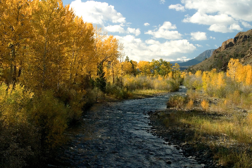 The Northfork of the Shoshone River, running east from the East Gate of Yellowstone, can be truly spectacular in the fall.