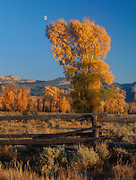 749450355 a half moon rises over the open plains with aspens populous tremuloides in fall color framing a wood plank fence in grand tetons national park in wyoming