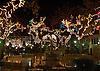 Illuminated Christmas decoration at the trees of the main square in Sóller at night<br /> <br /> Decoración de navidad iluminada en los árboles  de la Plaza de Sóller por la noche<br /> <br /> Beleuchtete Weihnachtsdekoration an der Bäumen um die Plaza in Sóller bei Nacht<br /> <br /> 1748 x 1240 pixel<br /> 150 dpi: 29,60 x 21,00 cm<br /> 300 dpi: 14,8 x 10,5 cm
