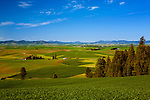 Views from the picnic ground at Kamiak Butte County Park are spectacular.  The small town of Palouse lies midway to distant ridges on the Idaho border and Skyline Drive.