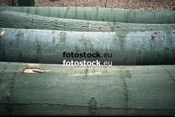 trunks of cutted of beeches<br /> <br /> troncos de hayas cortadas<br /> <br /> Baumstämme gefällter Buchen<br /> <br /> Original: 35 mm slide transparancy