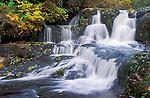 Alsea Falls, Coast Range Mountains, Oregon.