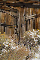 A fine art western abstract:  A detail of the brown, weathered wooden side of an old gold mining building with yellow flowers of rabbitbrush dusted with snow in the foreground, located in the historic ghost town of Bodie, northern California, east of the Sierras.