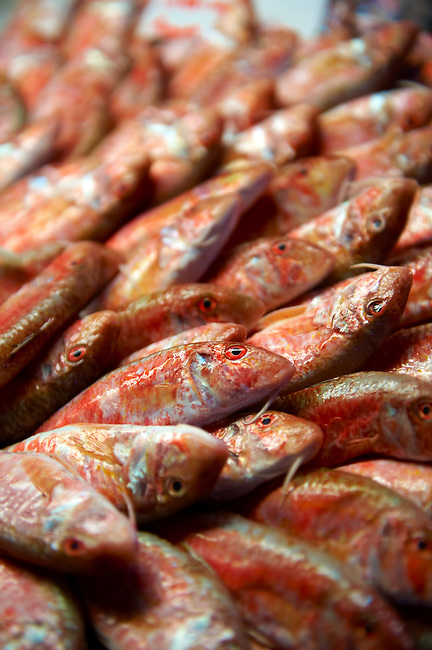 Fresh Red Mullet Venice Rialto Fish Market