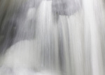 The Intimate Landscape - Rainforest