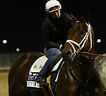 October 30, 2018 : City of Light at Churchill Downs on October 30, 2018  in Louisville, Kentucky in preparation for the Breeders' Cup Dirt Mile. Mary M. Meek/ESW/CSM