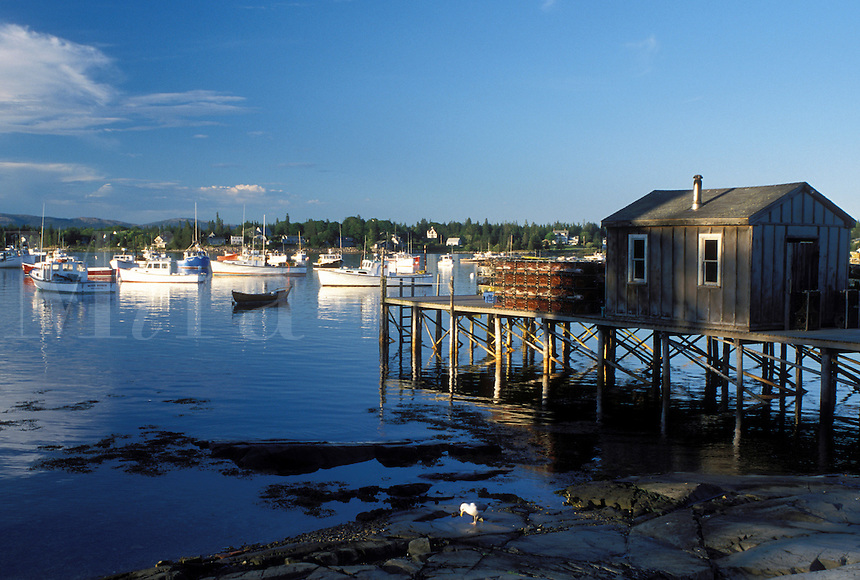 Bass Harbor, ME, Maine, Mount Desert Island, View of lobster fishing boats buoyed in the harbor in the fishing village of Bass Harbor on the Atlantic Ocean.
