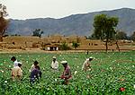 Opium Road