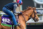 ARCADIA, CA - NOV 01: Ring Weekend, owned by St. Elias Stable & West Point Thoroughbreds, Inc. and trained by H. Graham Motion, exercises in preparation for the Breeders' Cup Mile at Santa Anita Park on November 1, 2016 in Arcadia, California. (Photo by Kazushi Ishida/Eclipse Sportswire/Breeders Cup)