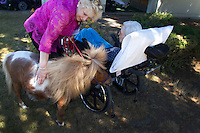 Miniature horses visit with residents at the Park Ridge Skilled Nursing Center in Shoreline, Washington on July 10, 2014. Veterinarian Dana Bridges Westerman arranges the therapy visit every year.
