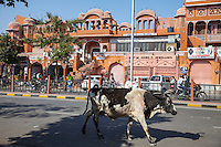 """Jaipur, Rajasthan, India.  Street Scene on a Main Street in """"The Pink City."""""""