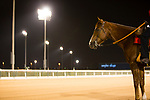 DUBAI,UNITED ARAB EMIRATES-MARCH 24:  Leadpony at Meydan Racecourse on March 24,2017 in Dubai,United Arab Emirates (Photo by Kaz Ishida/Eclipse Sportswire/Getty Images)