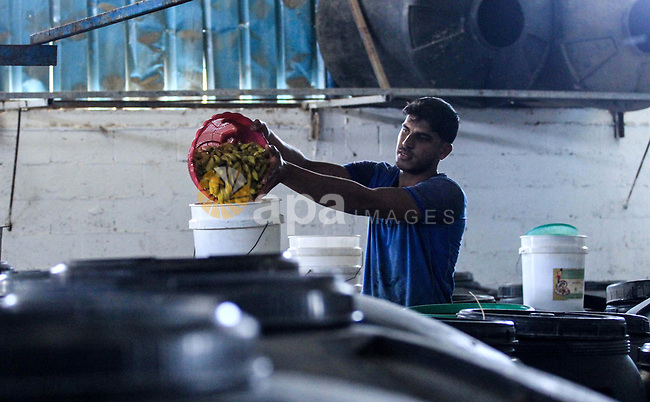 Palestinian workers cheak the pickled vegetables during the Muslims holy month of Ramadan at Pickles Factory in Dair Al Balah in the central of Gaza Strip on May 27, 2019. Photo by Mahmoud Khattab