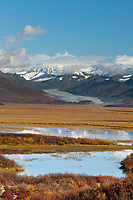 Autumn colors on the tundra wetlands, MaClaren Glacier flows out of the Alaska Range mountains, Interior, Alaska.