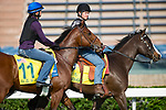 SHA TIN,HONG KONG-DECEMBER 08 : Stormy Liberal,trained by Peter Miller,exercises in preparation for the Hong Kong Sprint at Sha Tin Racecourse on December 8,2017 in Sha Tin,New Territories,Hong Kong (Photo by Kaz Ishida/Eclipse Sportswire/Getty Images)