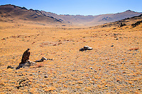 Asia Mongolia, Altai mountain,Saikhsai, the Golden Eagle of the hunter Saelikhan