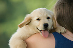 Teenage girl holding golden retriever puppy on her shoulder