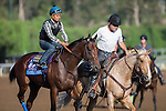 OCT 26 2014:American Pharoah, trained by Bob Baffert, exercises in preparation for the Breeders' Cup Juvenille at Santa Anita Race Course in Arcadia, California on October 26, 2014. Kazushi Ishida/ESW/CSM