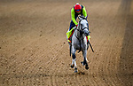 April 28, 2021: Soup and Sandwich, trained by trainer Mark Casse, exercises in preparation for the Kentucky Derby at Churchill Downs at Churchill Downs at Churchill Downs on April 29, 2021 in Louisville, Kentucky. John Voorhees/Eclipse Sportswire/CSM
