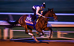 November 1, 2020: Thoughtfully, trained by trainer Steven M. Asmussen, exercises in preparation for the Breeders' Cup Juvenile Fillies at Keeneland Racetrack in Lexington, Kentucky on November 1, 2020. Alex Evers/Eclipse Sportswire/Breeders Cup /CSM
