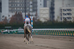 TOYOAKE,JAPAN-DECEMBER 04: Lani,ridden by Hiroyuki Uchida,is preparing for the Champions Cup at Chukyo Racecourse on December 04,2016 in Toyoake,Aichi,Japan (Photo by Kaz Ishida/Eclipse Sportswire/Getty Images)