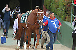 April 12, 2014: #1 Danza before the running of the Arkansas Derby at Oaklawn Park in Hot Springs, AR. Justin Manning/ESW/CSM