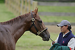 Animal Kingdom, winner of the 137th Kentucky Derby, gets a bath after his morning gallop at Fair Hill Training Center in Fair Hill, MD on May 14, 2011. (Joan Fairman Kanes/EclipseSportswire)