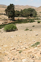 Ain Wif Oasis, Libya - Site of a Roman bath for a military outpost, south of Tripoli, on the Jebel Nafusa.  Water from a natural spring provides greenery for grazing by goats and sheep.