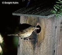 WR01-003z  House Wren - at birdhouse - Troglodytes aedon