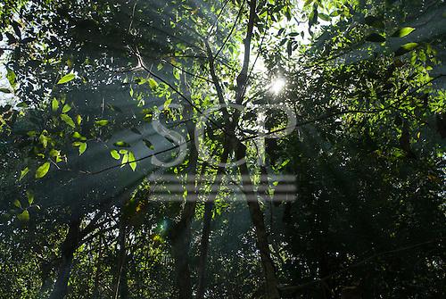 Mato Grosso State, Brazil. Aldeia Metuktire (Kayapo). Sun through transition forest.