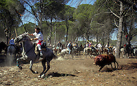 The bull chases a man on horseback as they take part in the 'El toro de la Vega' (The bull of the plain) bullfight, 13 September 2005 in Tordesillas. On the second Tuesday of September, since the fifteenth century the village has celebrated this very special bullfight. The arena of the bullfight is the plain across the river from the village and it is up to a number of young men with lances to dispute the honour of making the fatal strike. (c) Pedro ARMESTRE