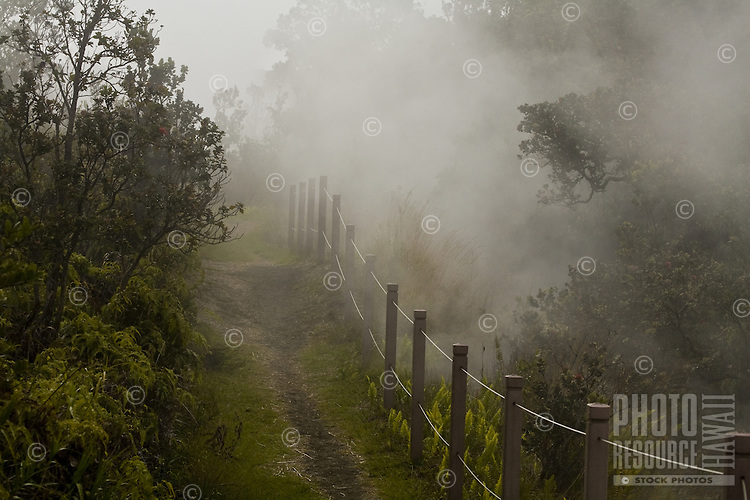 Steam rising through the trees by a walking path at Volcanoes National Park