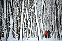 2021_01_24_Biggin_Snowy_Woodland