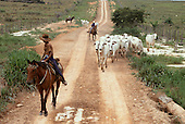 Brazil/ Paraguay border. Rounding up cattle on a ranch.