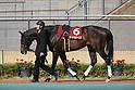 Horse Racing : Kinko Sho 2020