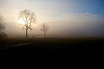 Europa, DEU, Deutschland, Baden-Wuerttemberg, Schwaebische Alb, Kohlstetten, Morgenstimmung, Typische Landschaft, Baeume, Sonnenaufgang, Nebel, Dunst, Natur, Umwelt, Landschaft, Jahreszeiten, Stimmungen, Landschaftsfotografie, Landschaften, Landschaftsphoto, Landschaftsphotographie, Wetter, Wetterelemente, Wetterlage, Wetterkunde, Witterung, Witterungsbedingungen, Wettererscheinungen, Meteorologie, Wettervorhersage, <br /> <br /> [Fuer die Nutzung gelten die jeweils gueltigen Allgemeinen Liefer-und Geschaeftsbedingungen. Nutzung nur gegen Verwendungsmeldung und Nachweis. Download der AGB unter http://www.image-box.com oder werden auf Anfrage zugesendet. Freigabe ist vorher erforderlich. Jede Nutzung des Fotos ist honorarpflichtig gemaess derzeit gueltiger MFM Liste - Kontakt, Uwe Schmid-Fotografie, Duisburg, Tel. (+49).2065.677997, ..archiv@image-box.com, www.image-box.com]